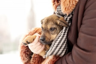 Image of sad dog being held by it's owner for Vets Now article on dogs being sick
