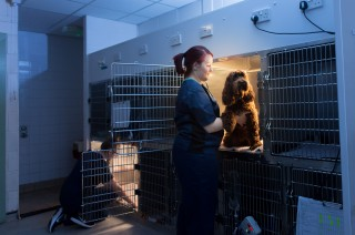 An image of a dog being cared for at night by a Vets Now Vet In Bournemouth.