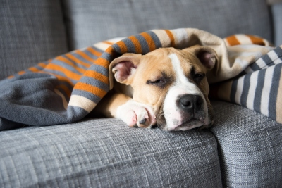 Antifreeze And Dogs What Should I Do If My Dog Licks Ethylene Glycol Vets Now