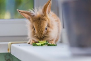 Article on the most common emergencies and rabbit illnesses