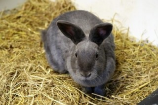 Caring for your rabbits in cold weather - Vets Now