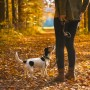 An image of a Jack Russel dog being walked by its owner in autumn.