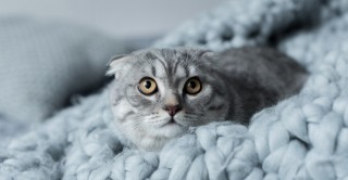 Image of scared cat for Vets Now article on fireworks