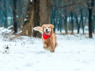 Winter safety for dogs - Vets Now