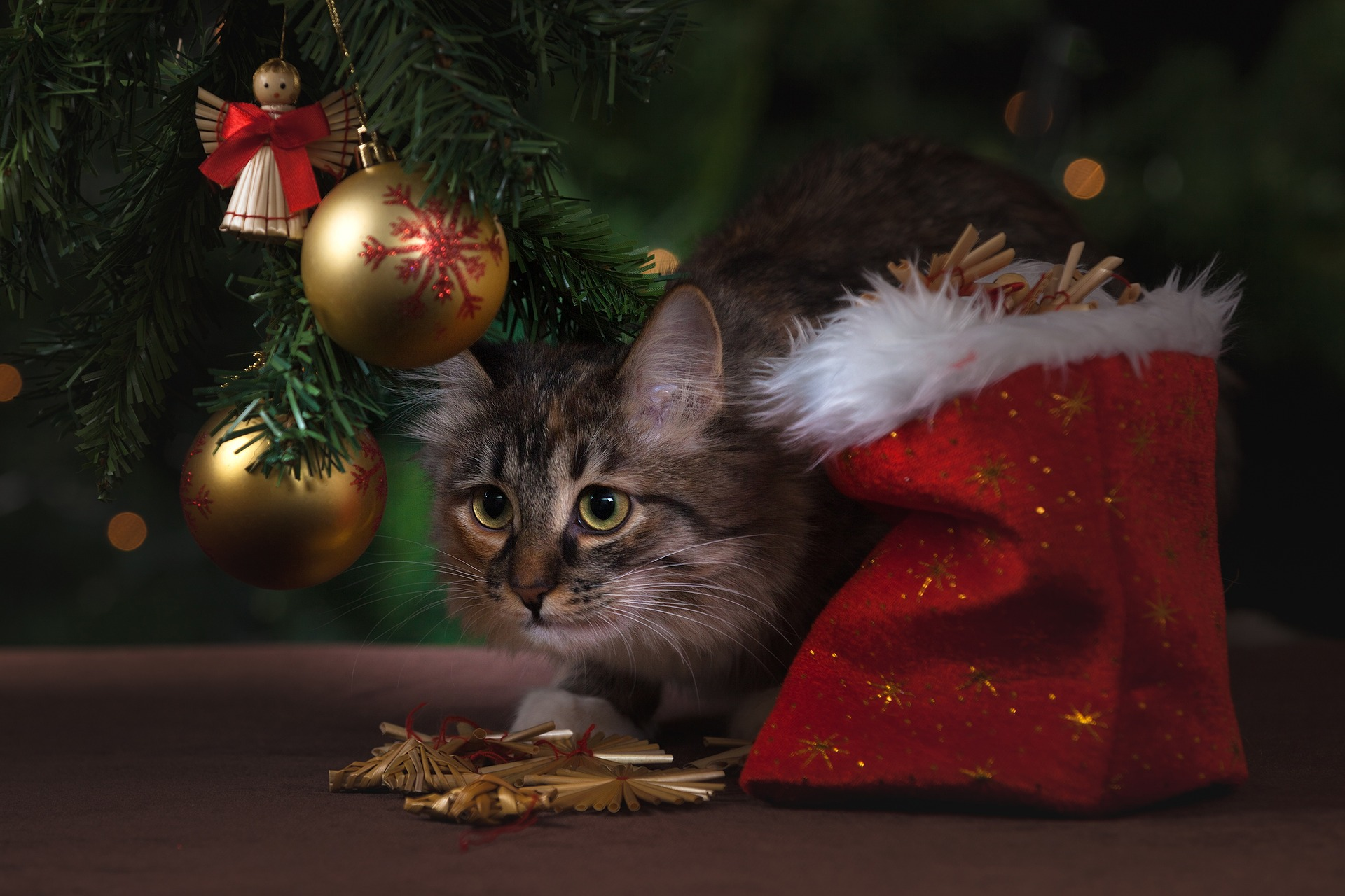 Ultimate Guide To Cat Proofing Your Christmas Tree Vets Now