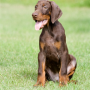 What is parvovirus in dogs - Vets Now