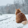 image of a cat in the snow with it's back to the camera