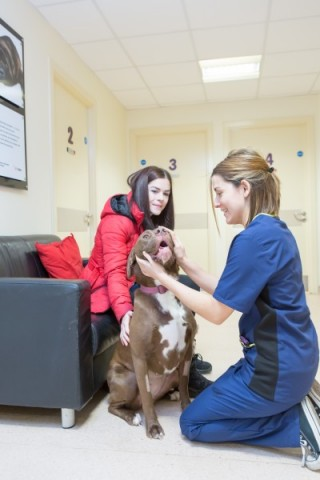 Image showing pet owner visiting Vets Now pet emergency hospital at nigh