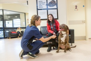 Vets Now Glasgow visiting the hospital