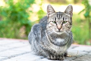 Image of a cat outdoors from Vets Now