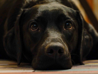 image of a dog lying down for vets on now article on constipated dog