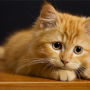 Image of a kitten