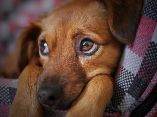 Image of sad puppy for Vets Now article on puppy strangles
