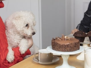 Image of dog eating chocolate for Vets Now article on is chocolate bad for dogs and what to do if your dog eats chocolate