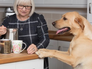 Image of dog looking at hot chocolate powder for Vets Now article on is chocolate bad for dogs and dangers of chocolate to dogs