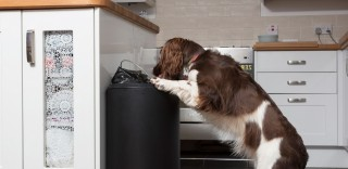 Image of dog raiding bin for chocolate for Vets Now article on my dog ate chocolate and what happens when a dog eats chocolate