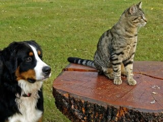Image of a cat and dog for Vets Now article on pet poisoning