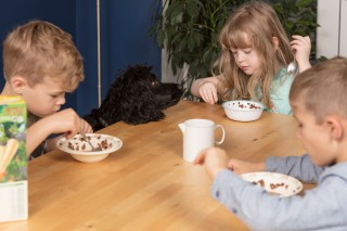 Image of children eating chocolate cereal for Vets Now article on chocolate dogs and is chocolate bad for dogs