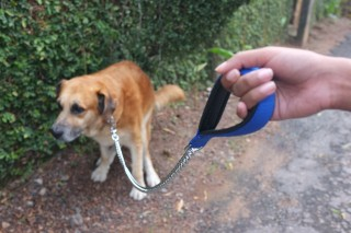 Image of dog doing poo for Vets Now article on how do I stop my dog eating poop