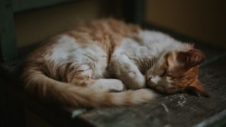 Cat Being Sick How To Treat Cat Vomiting Vets Now