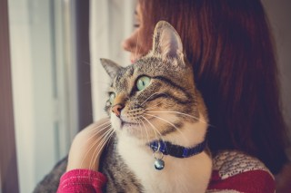 sudden weight loss in cats uk