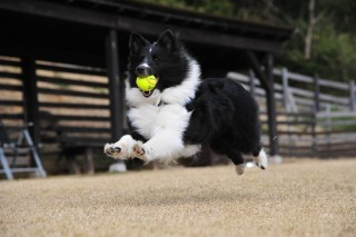 Image of dog exercising for Vets Now article on dogs with obesity