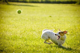 Image of dog exercising in the sun for Vets Now article on heat stroke