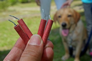 An image of someone holding fireworks close to a dog for Vets Now article on silent fireworks