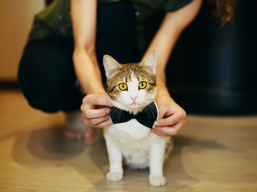 Dog Cat Bow Ties Ribbons Vets Issue Safety Warning Vets Now