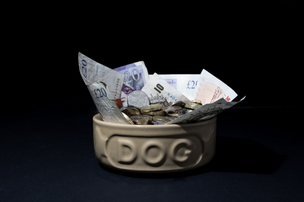 Six Places To Get Financial Help With Vet Bills Vets Now