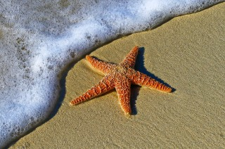 An image of a starfish on the beach for Vets Now article on dog ate starfish