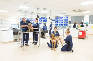 Image of vets and nurses working in Vets Now Glasgow Hospital