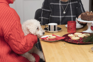Image of a dog staring at mince pies for Vets Now article on dangers of mince pies to dogs