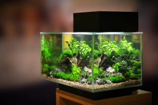 Image of a fish aquarium for Vets Now article on goldfish lump