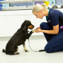 Image of a vet with a dog for Vets Now article on dog poisoning