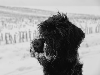 Image of a dog cold weather for Vets Now blog post on dog with hypothermia