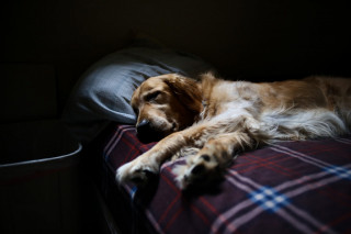 Image of a sleeping dog for Vets Now Support Centre