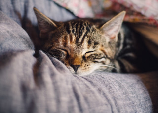 image of a cat with its eyes closed for vets now article on cat eye health and cat eye problems