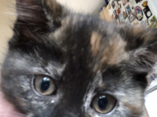 Image of a kitten for Vets Now article on vet nurse fostering cats