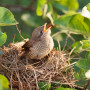 Image of a young bird for Vets Now article on found a baby bird