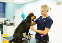 This image is of a dog at Vets Now with Addison's. Addison disease in dogs can be potentially fatal