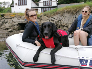 Image of Lola the rescue dog for Vets Now article on dog ate seaweed