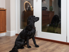 Dog staring at fireworks for Vets Now article on dangers of fireworks to pets