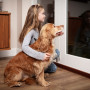 Image of a dog looking out at fireworks from a window for Vets Now articles on dogs and fireworks