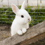 Image of a rabbit for Vets Now article on rabbits and fireworks