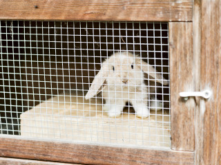 Image of a rabbit in a hutch for Vets Now article on rabbits and fireworks