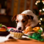 Image of a dog and a mince pie for Vets Now article on can dogs eat mince pies?