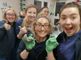 Image of staff at Vets Now Farnham for Vets Now article on are buffalo chews safe for dogs