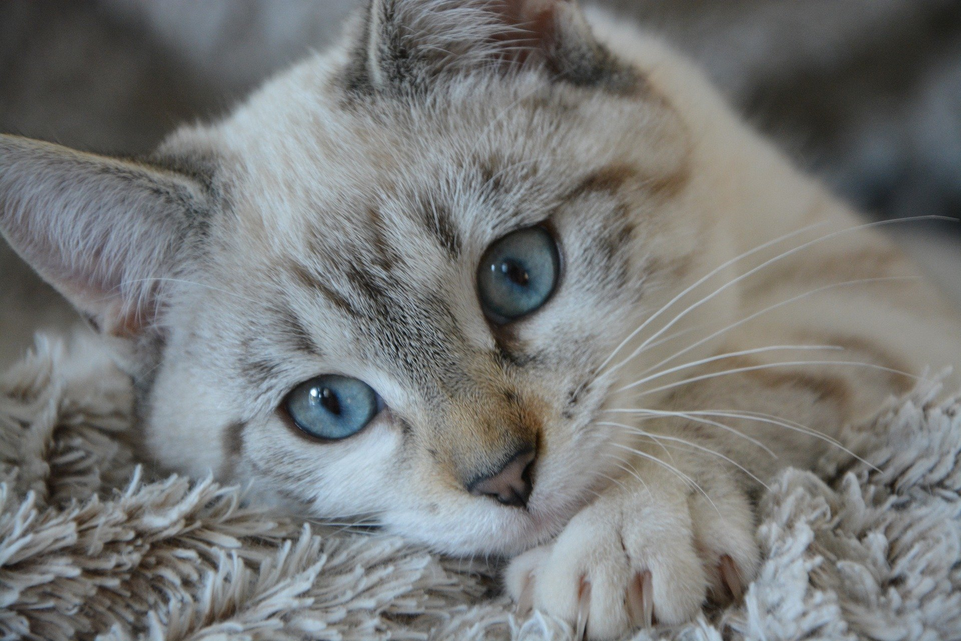 How Long Do Cats Live Cat Lifespan Guide Vets Now