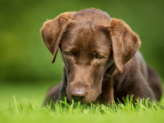 Why Do Dogs Eat Grass Dog Eating Grass Causes Vets Now
